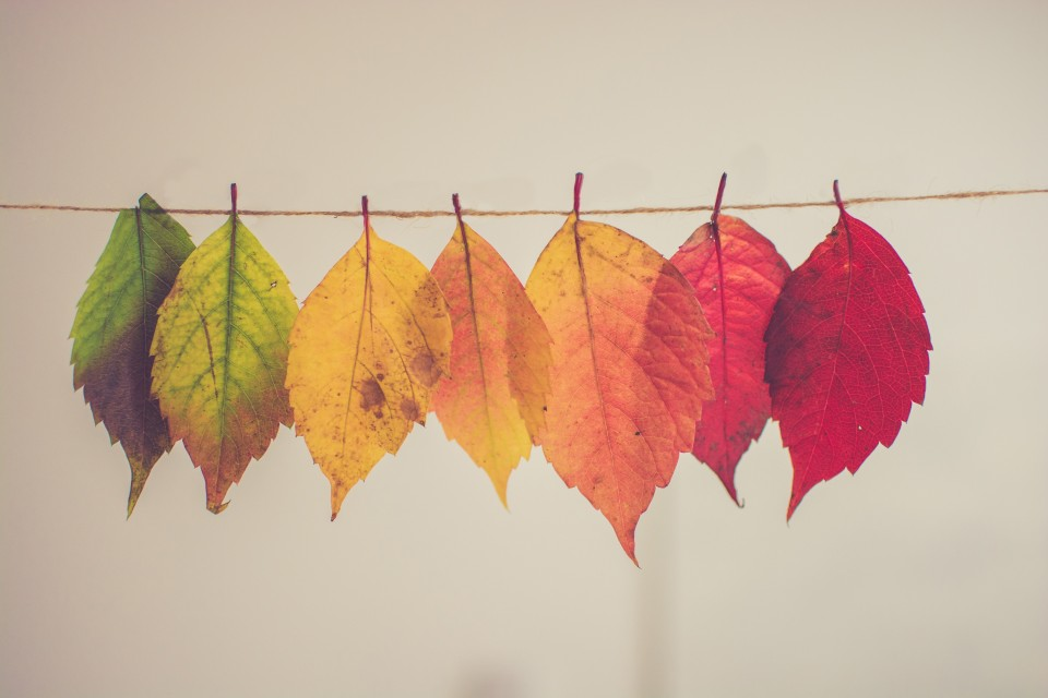 Changing_colours_of_leaf.jpg