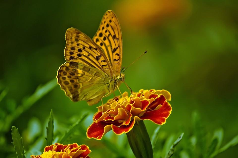 butterfly-1829404_1920.jpg
